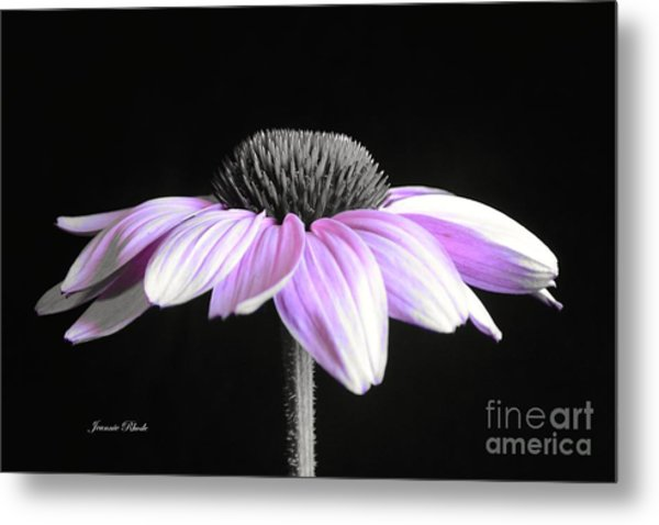 Grape Mist Metal Print