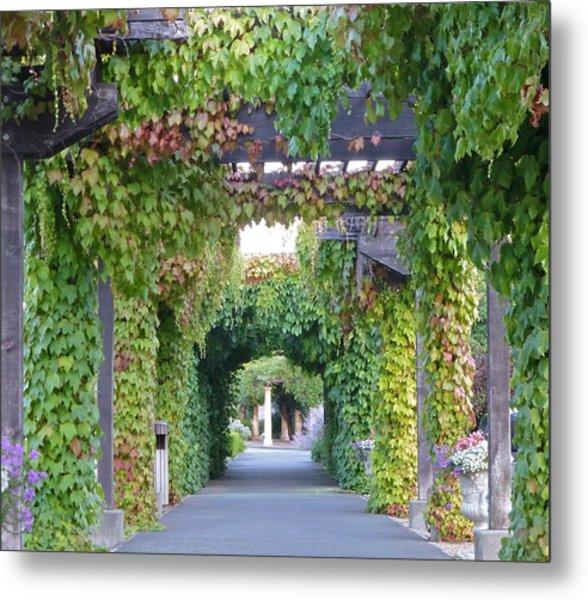 Grape Vine Covered Arbor Metal Print