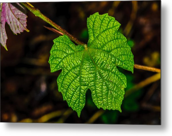 Grapes Of Rath Metal Print