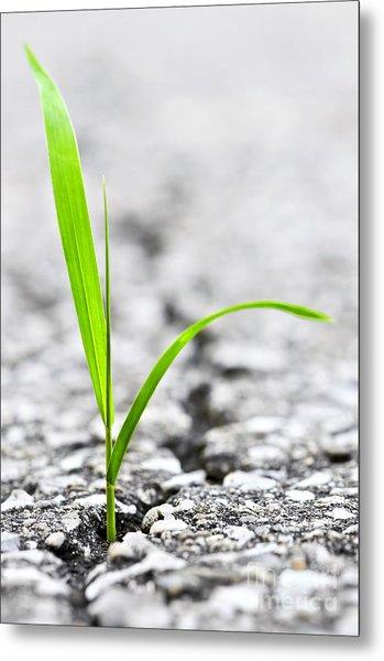 Grass In Asphalt Metal Print