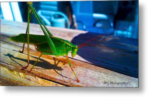 Grass Hopper Metal Print