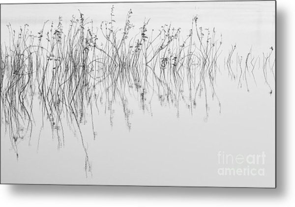 Grass In Lake Metal Print
