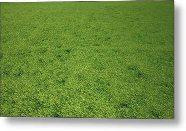 Grass Meadow, Artwork Metal Print by Leonello Calvetti