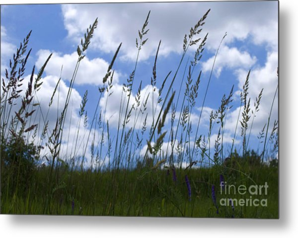 Grass Meets Sky Metal Print