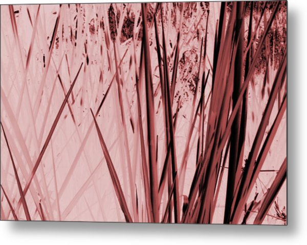 Grasses Metal Print by Colleen Cannon