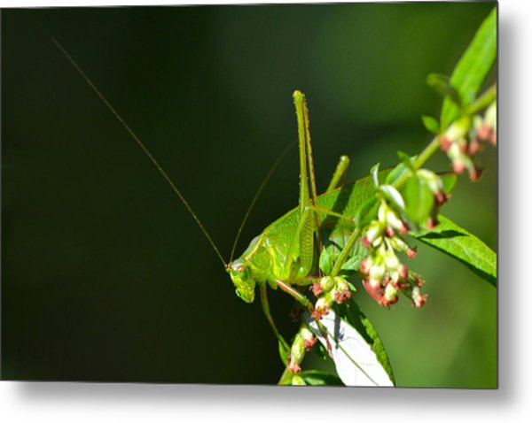 Grasshopper #1 Metal Print