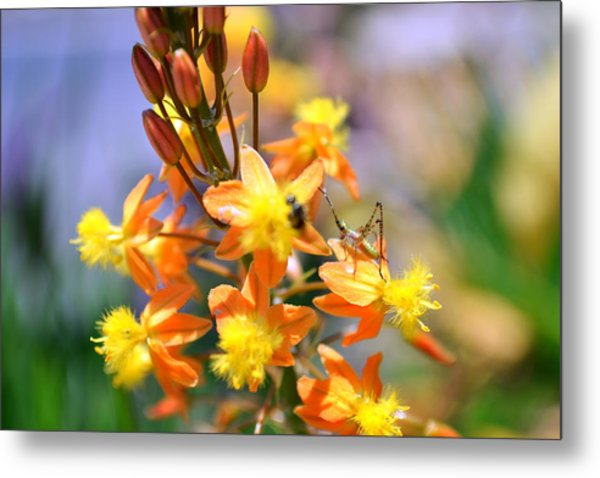 Grasshopper And The Bee Metal Print by Ashley Fortier