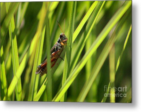 Grasshopper In Grass Metal Print
