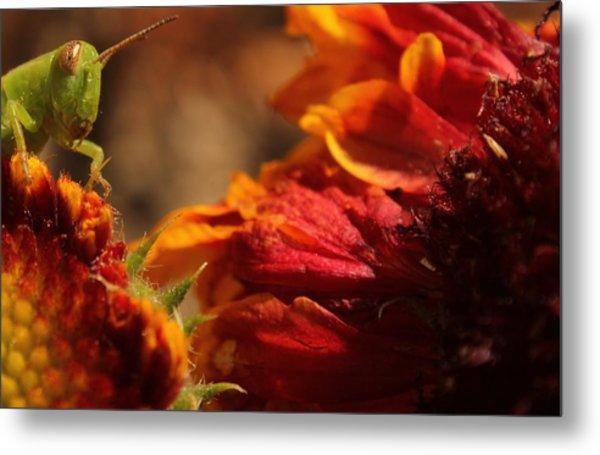 Grasshopper In The Marigolds Metal Print