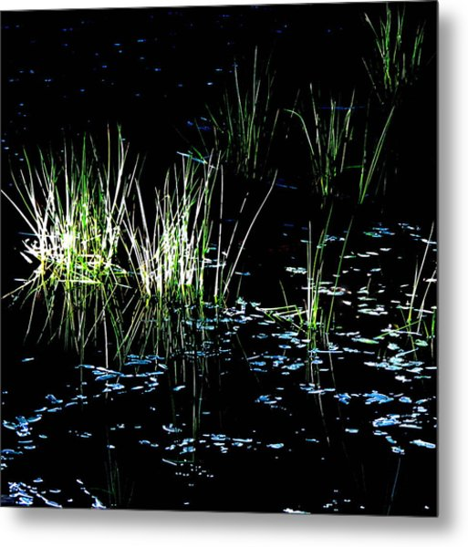 Grassy Lights Metal Print