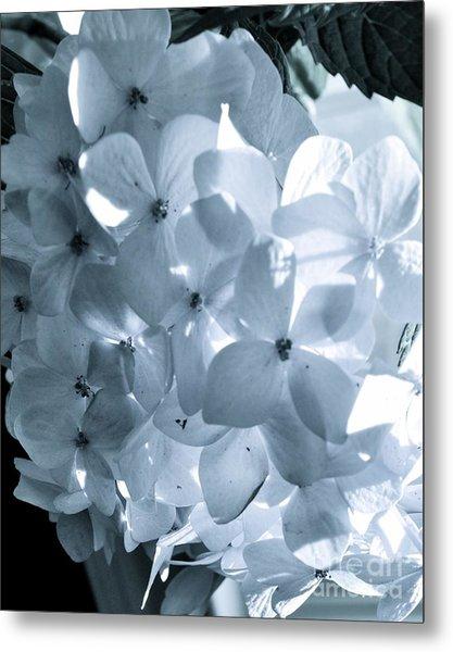 Gray Hydrangea Metal Print