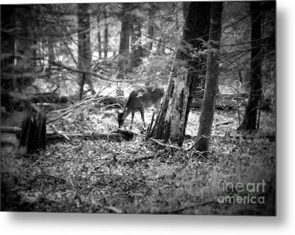 Grazing Deer Metal Print