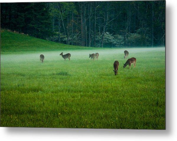 Grazing Deer Metal Print