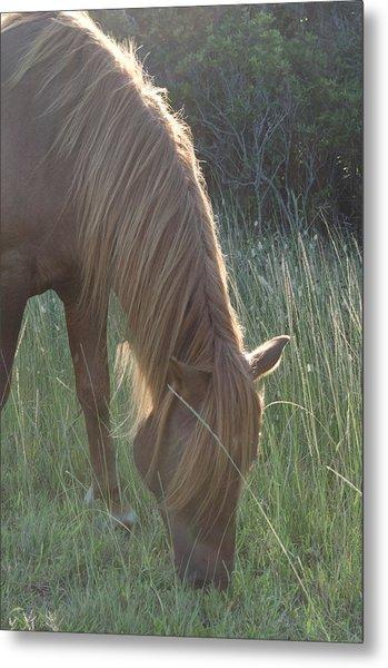 Grazing Horse Metal Print by Nancy Edwards