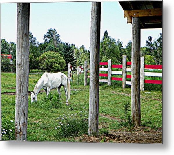 Grazing In The Meadow Metal Print by Dianne  Lacourciere