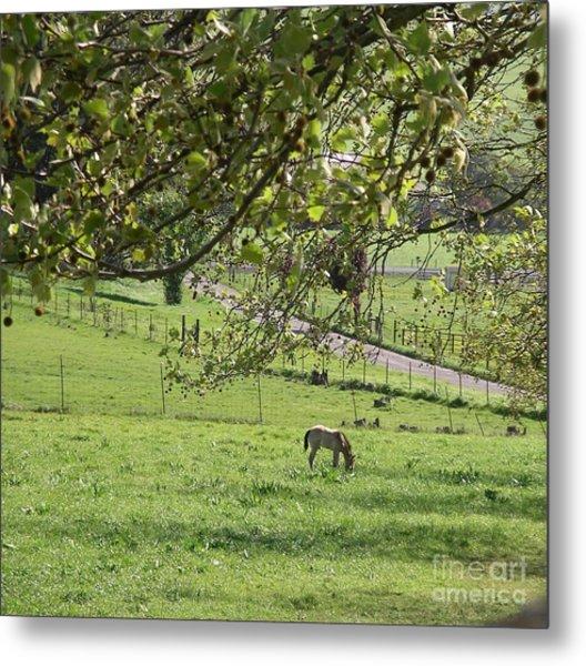 Grazing Under The Oak Tree Metal Print