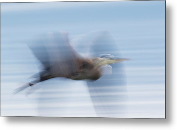 Great Blue Heron, Abstract Flight Metal Print