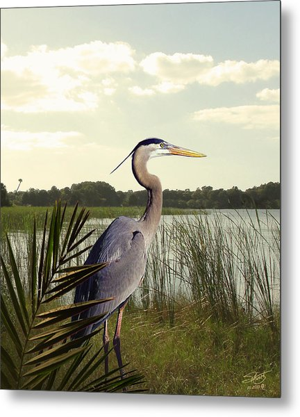 Great Blue Heron In The Bulrushes Metal Print by M Spadecaller