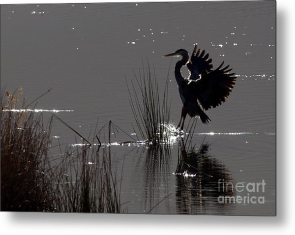 Great Blue Heron Silhouette Metal Print by Sharon Talson