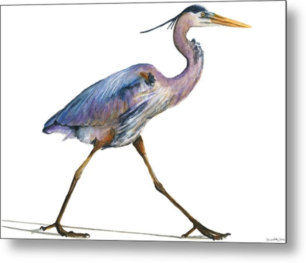 Great Blue Heron Strolling Metal Print by Carlo Ghirardelli
