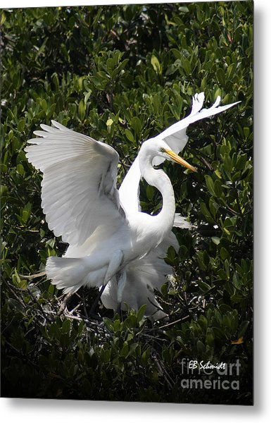 Great Egret 03 Metal Print