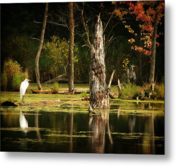 Great Egret And Great Blue Heron Metal Print by Scott Hovind