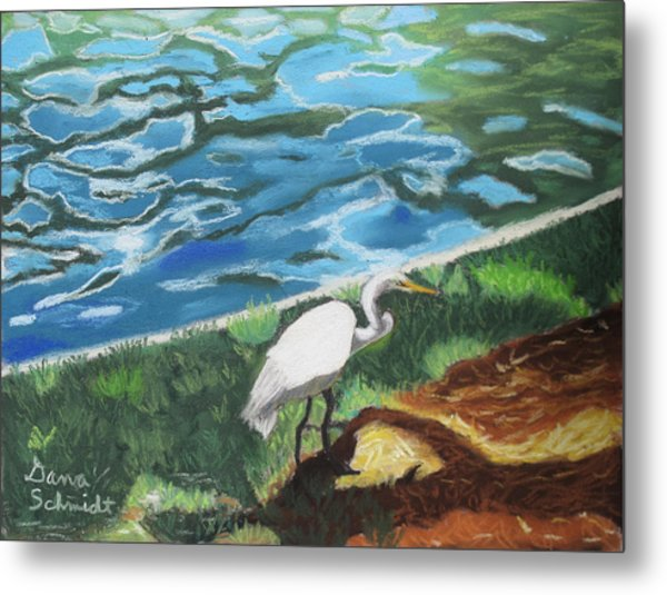 Great Egret In Florida Metal Print