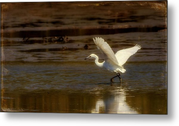 Great Egret Taking Off Metal Print