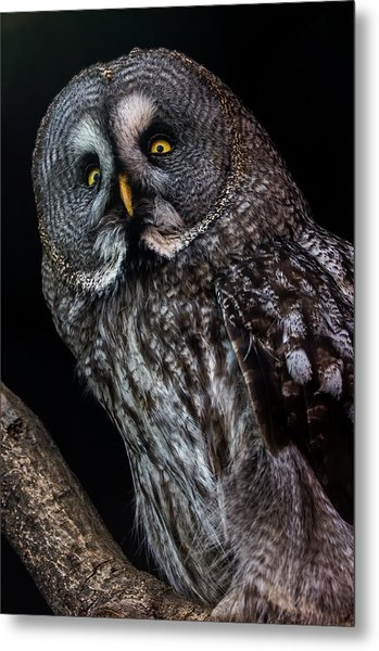 Great Grey Owl Metal Print by Gerard Pearson