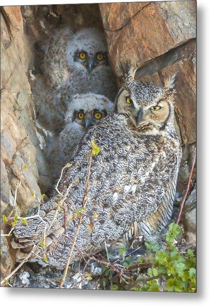 Great Horned Owl And Owlets Metal Print
