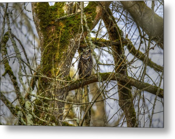 Great Horned Owl Metal Print by David Yack