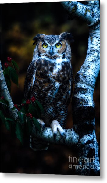 Great Horned Owl II Metal Print by Todd Bielby