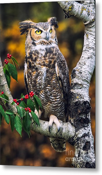 Great Horned Owl IIi Metal Print by Todd Bielby