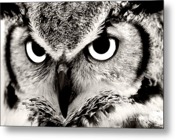 Great Horned Owl In Black And White Metal Print