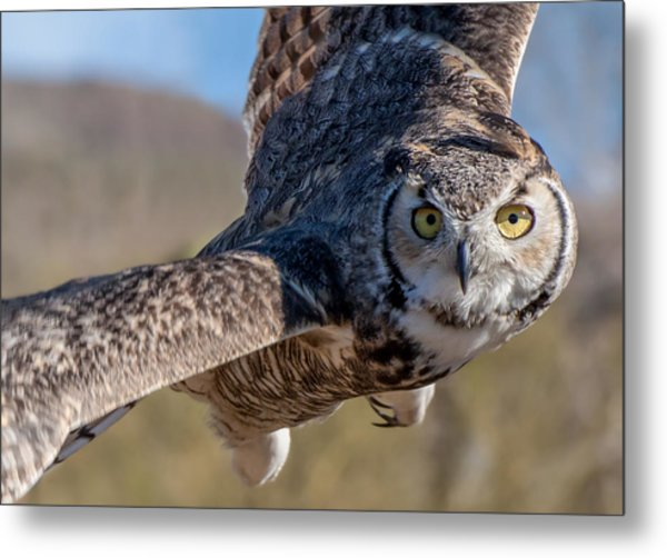Great Horned Owl In Flight - Coming At-cha Metal Print
