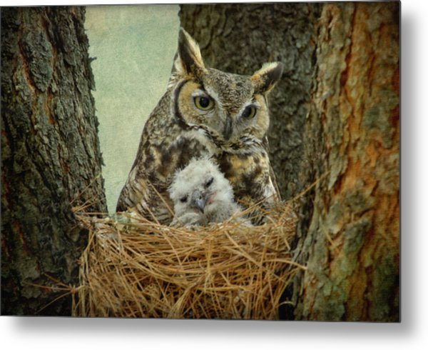 Great Horned Owl Mom And Baby Metal Print by Cgander Photography