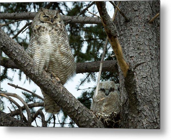 Great Horned Owls Metal Print