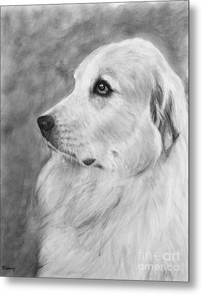 Great Pyrenees In Profile Drawing Metal Print
