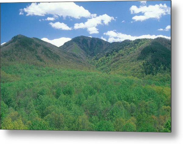 Great Smokey Mountains National Park, Tn Metal Print by James Steinberg