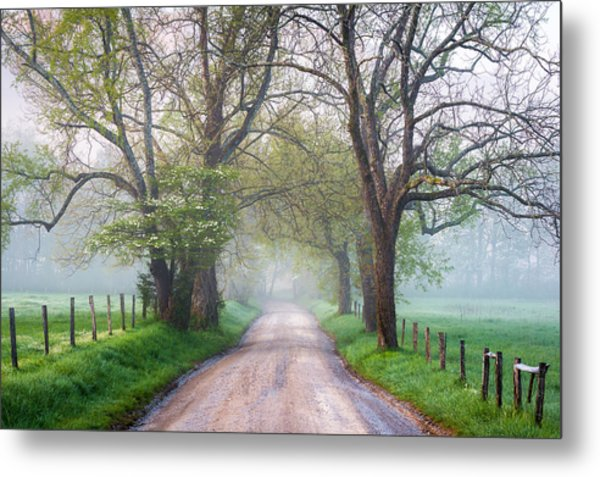 Great Smoky Mountains National Park Cades Cove Country Road Metal Print by Dave Allen