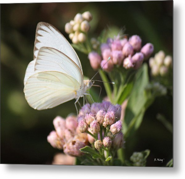 Great Southern White Butterfly On Pink Flowers Metal Print