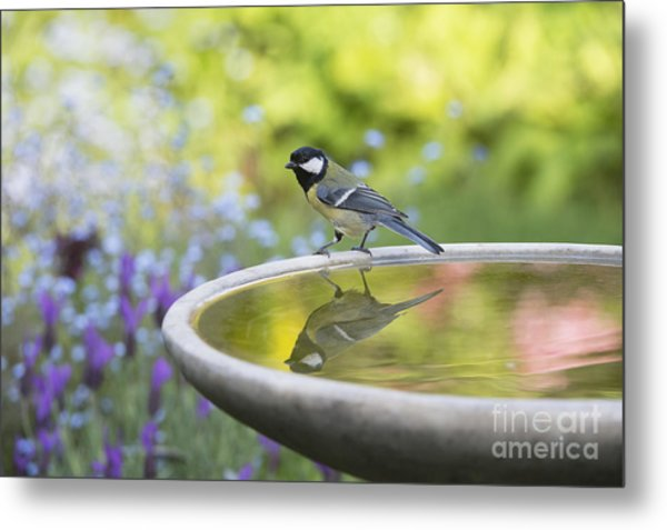 Great Tit Reflection  Metal Print