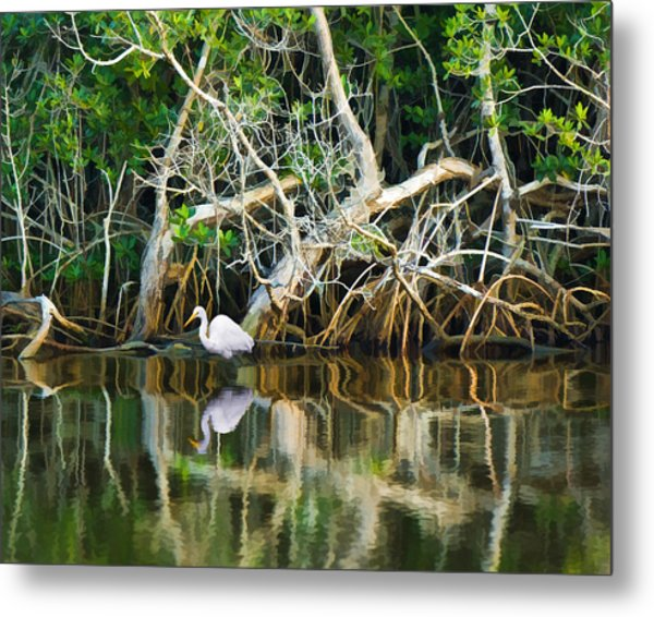 Great White Egret And Reflection In Swamp Mangroves Metal Print