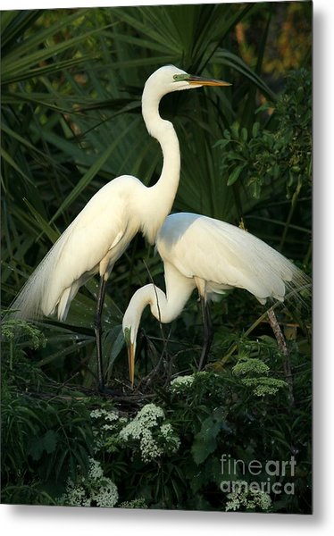 Great White Egret Mates Metal Print
