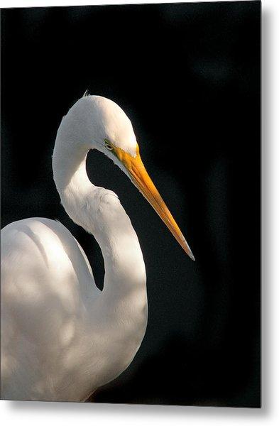 Great White Egret Portrait. Merritt Island N.w.r. Metal Print