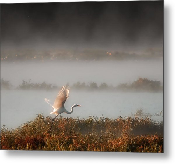 Great White Heron In Morning Mist Metal Print