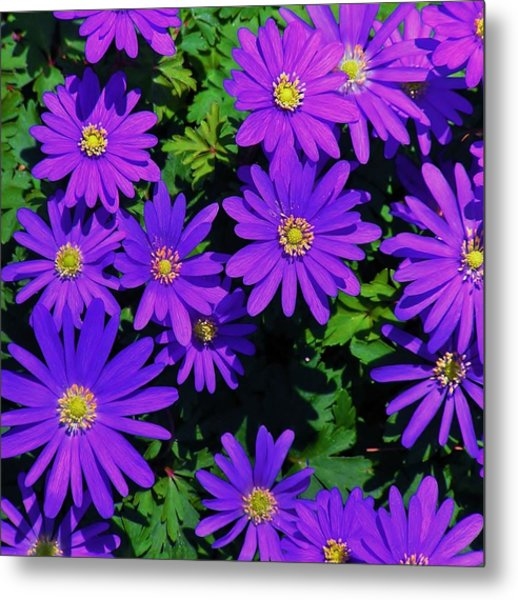 Grecian Wildflowers 2 Metal Print