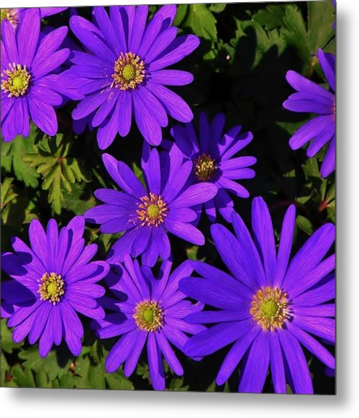Grecian Wildflowers Metal Print
