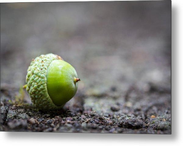 Green Acorn. Metal Print