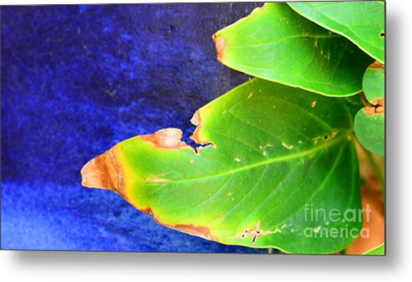Green And Blue  Metal Print by Bobby Mandal